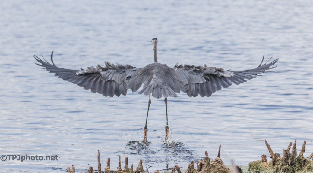 We Have Lift Off, Heron - Click To Enlarge
