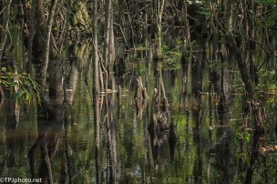Beauty Of A Swamp - Click To Enlarge