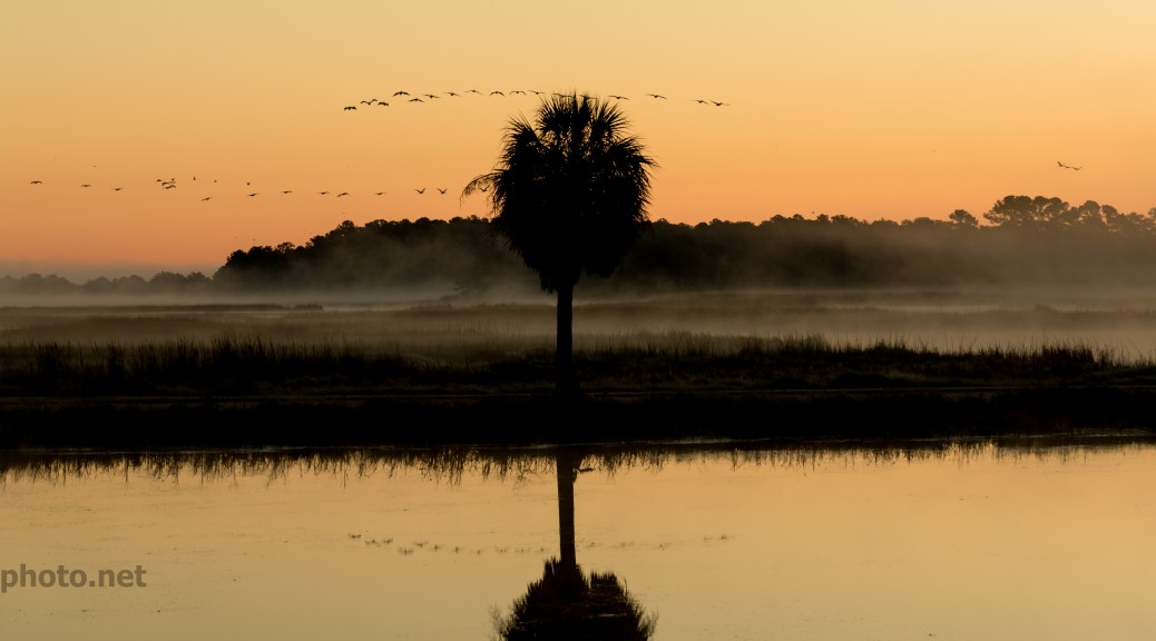 Migrating Pelicans At Dawn - click to enlarge
