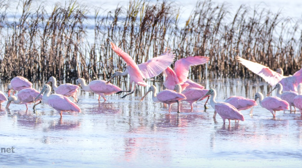 Parade Of Pink - click to enlarge