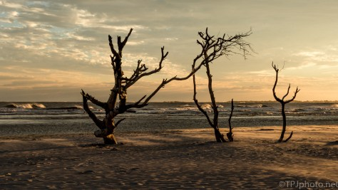 Old Bones On The Shore - click to enlarge