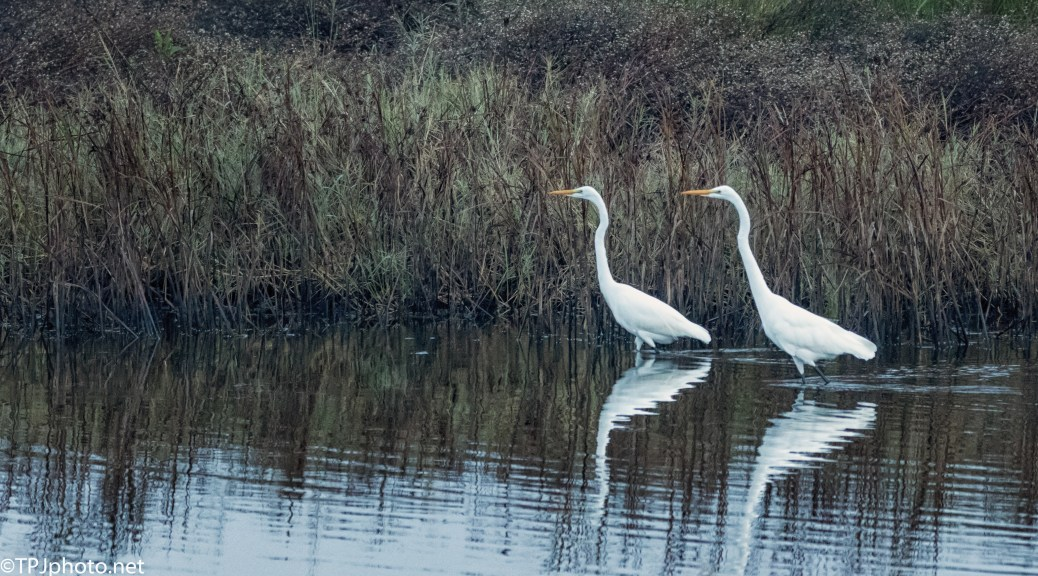 Egrets At A Marsh - click to enlarge