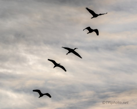 Birds In Silhouette - click to enlarge
