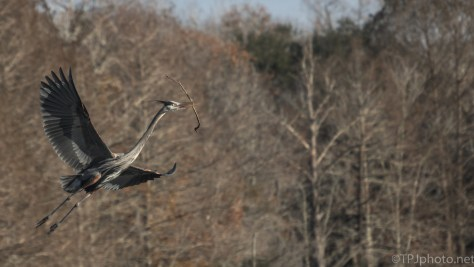 Dragons Are Coming, Heron - click to enlarge