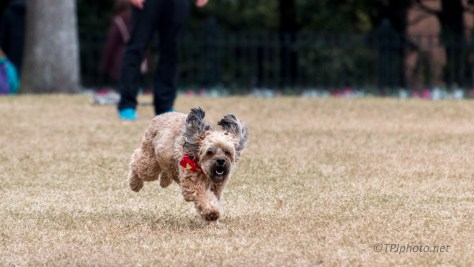 A Flying Dog - click to enlarge
