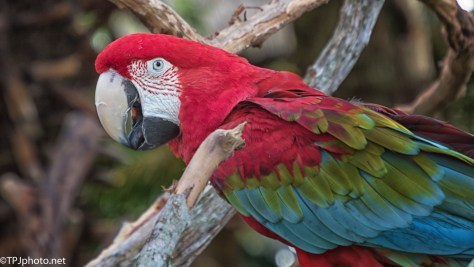 Macaw Portrait - click to enlarge