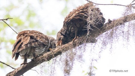 Owls, Kissie Face, Who Knew - click to enlarge