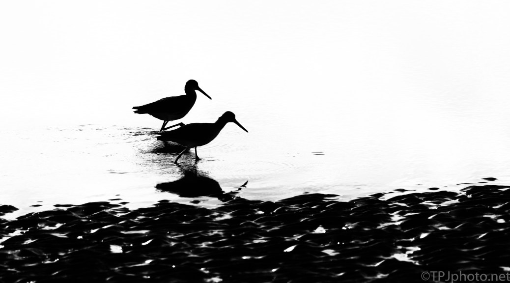 Walking On The Shore - click to enlarge