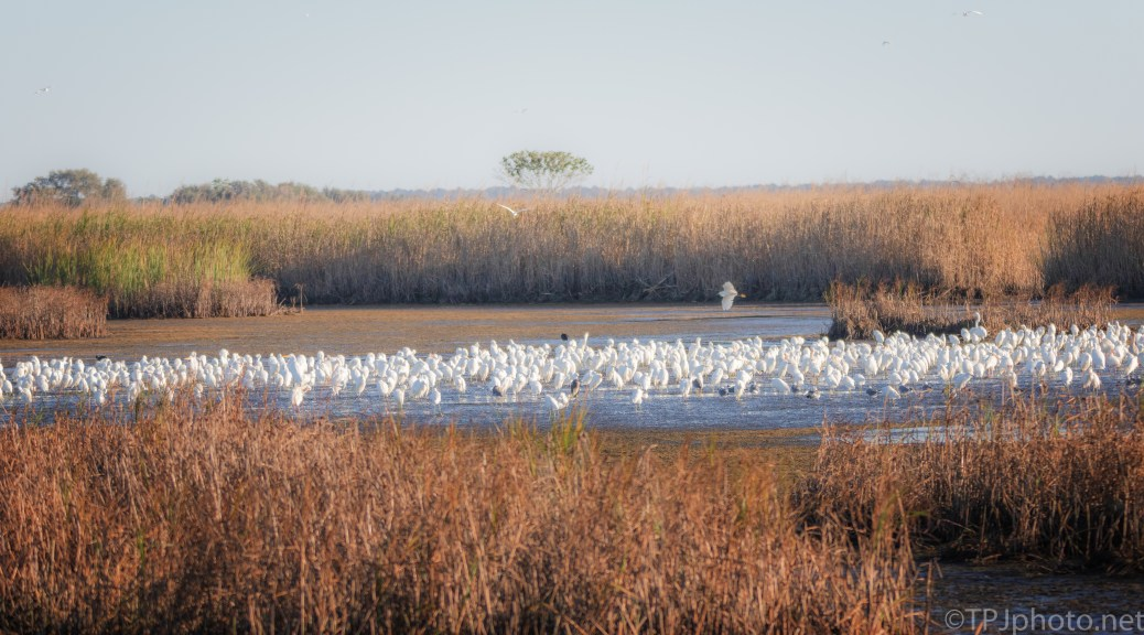 A Morning View In A Marsh - click to enlarge
