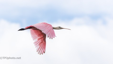 Perfect Sky For A Spoonbill
