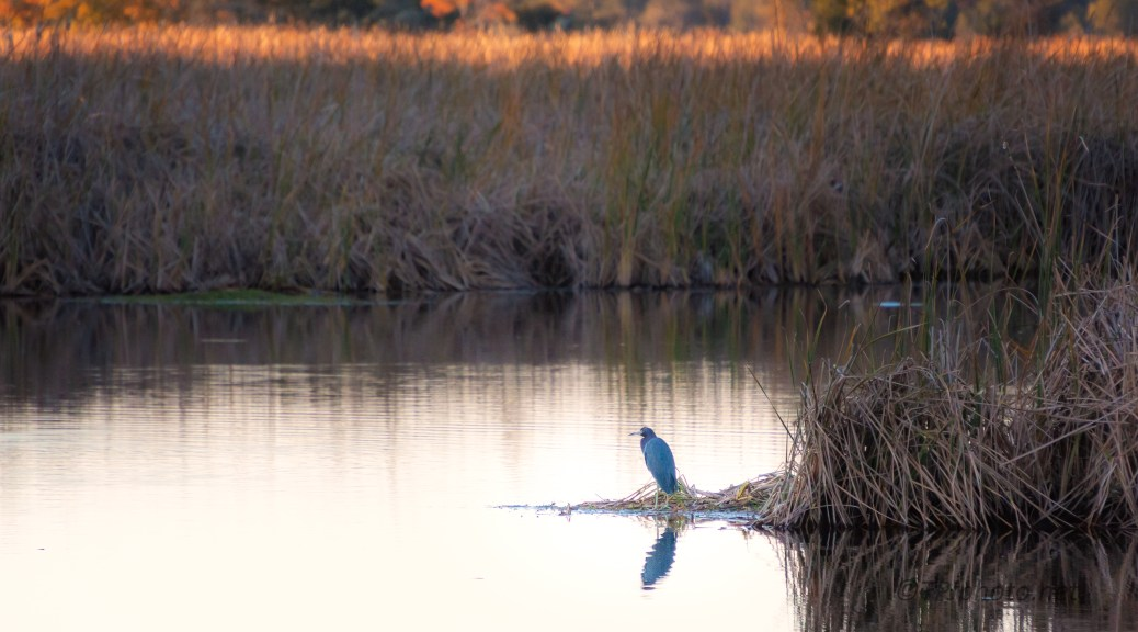Lowcountry Sundown - click to enlarge