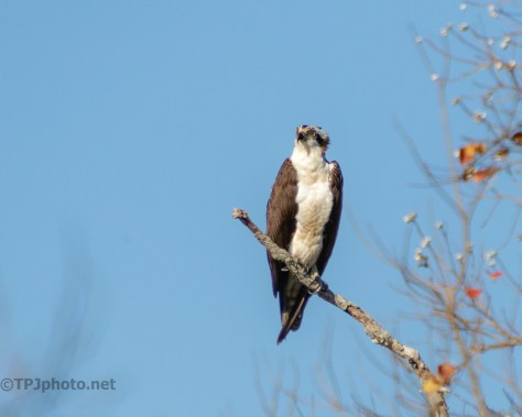 Osprey At A Great Fishing Spot - click to enlarge