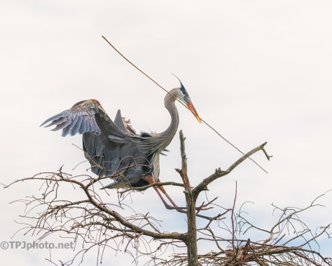 Heron, Hard At Work - click to enlarge