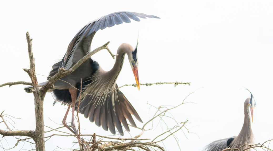 A Dragon Dance, Heron - click to enlarge