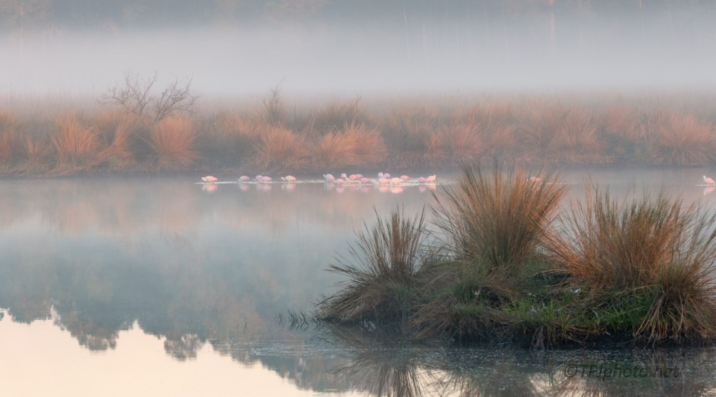 A Morning Out In The Fog - click to enlarge