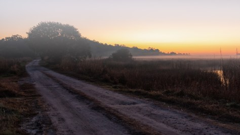 Early Morning Marsh - click to enlarge