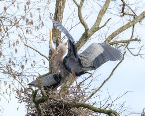 A Heron Greeting