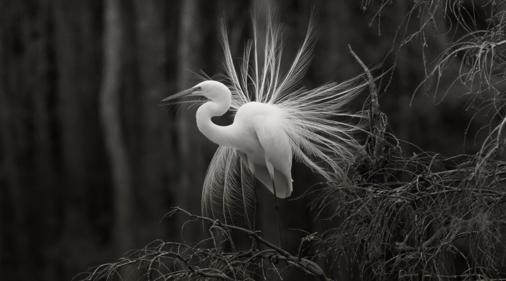Display In Black And White - click to enlarge