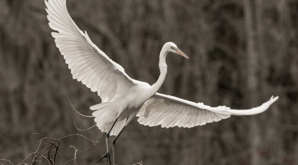 Egret, A Soft Colored Photograph