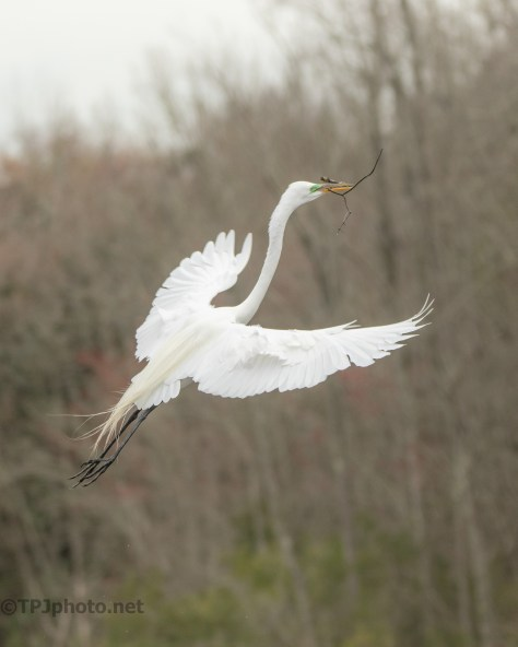 Smooth Entrance, Egret