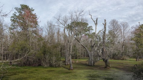 What I Saw, A Swamp