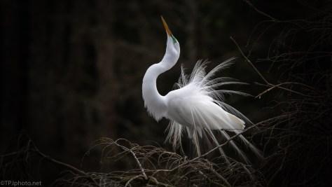 The Egret Dance