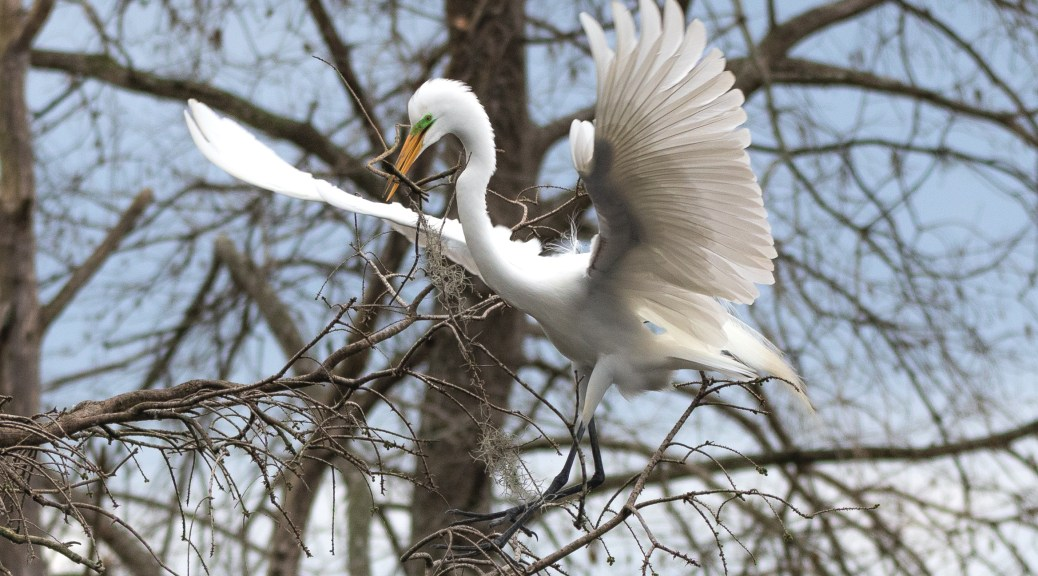 Dedication, Great Egret