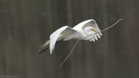 Floating In The Air, Egret