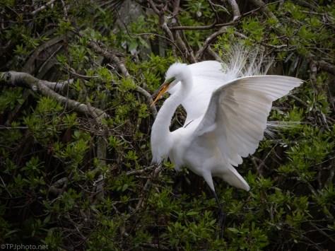 White And Green, Egret