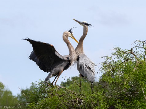 A Special Greeting, Herons