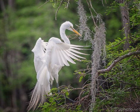 Fortunate To Be Standing There, Egret