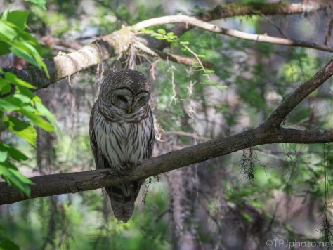 Waiting Patiently, Owl
