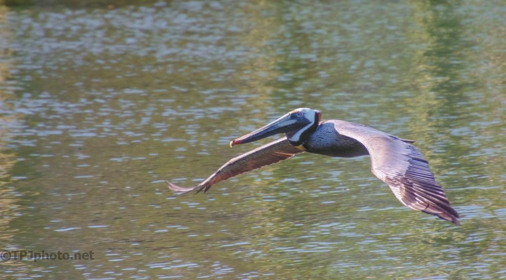 Pelican, Eye To Eye
