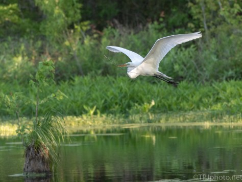 Pretty Fly By, Egret