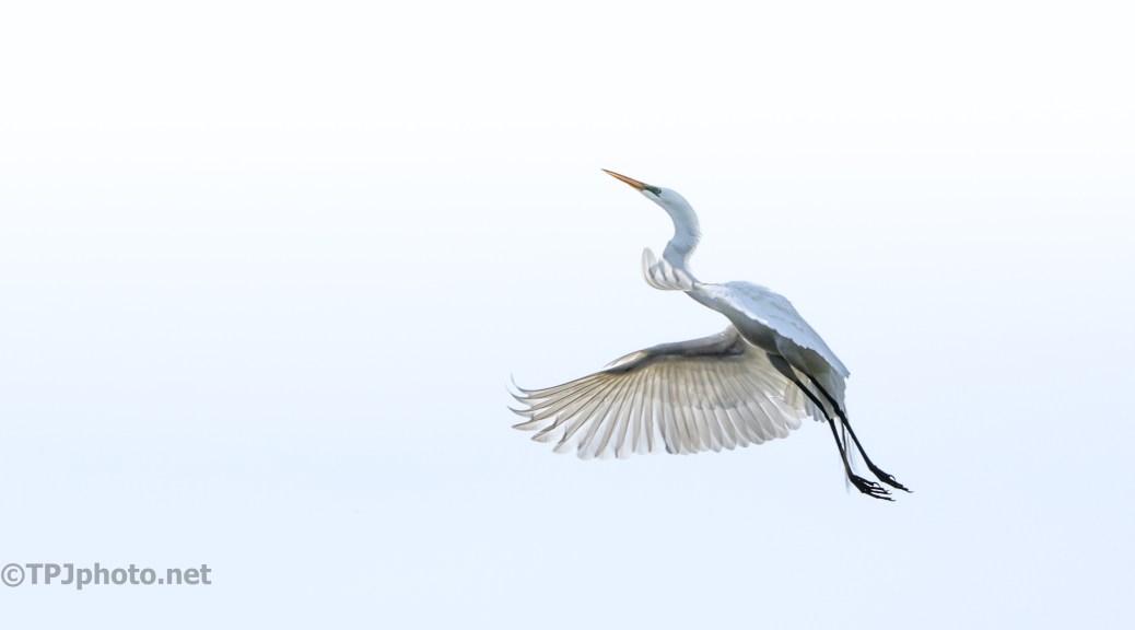 Egret, Climbing Up High