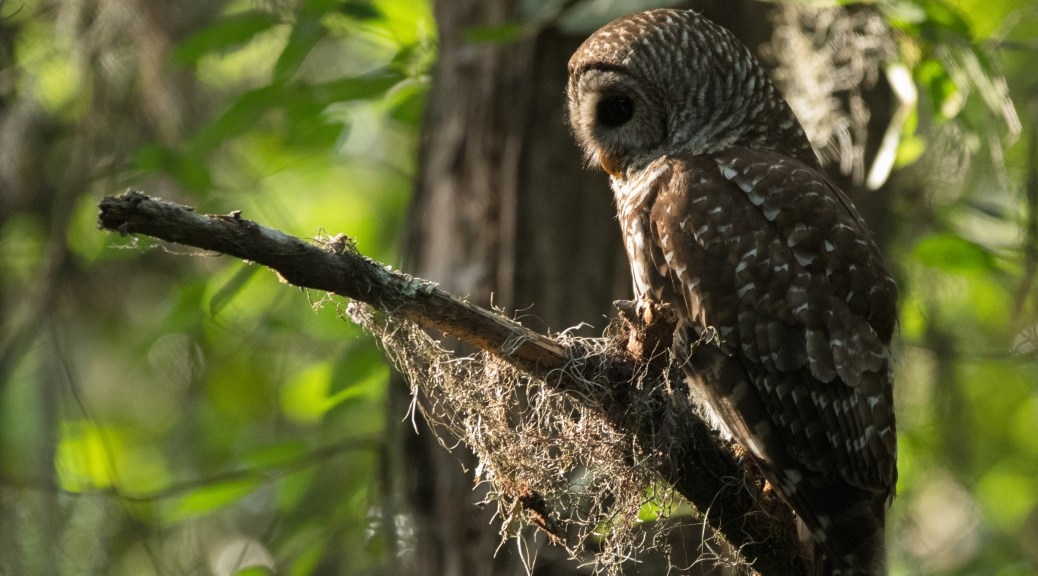 Using The Light, Owl