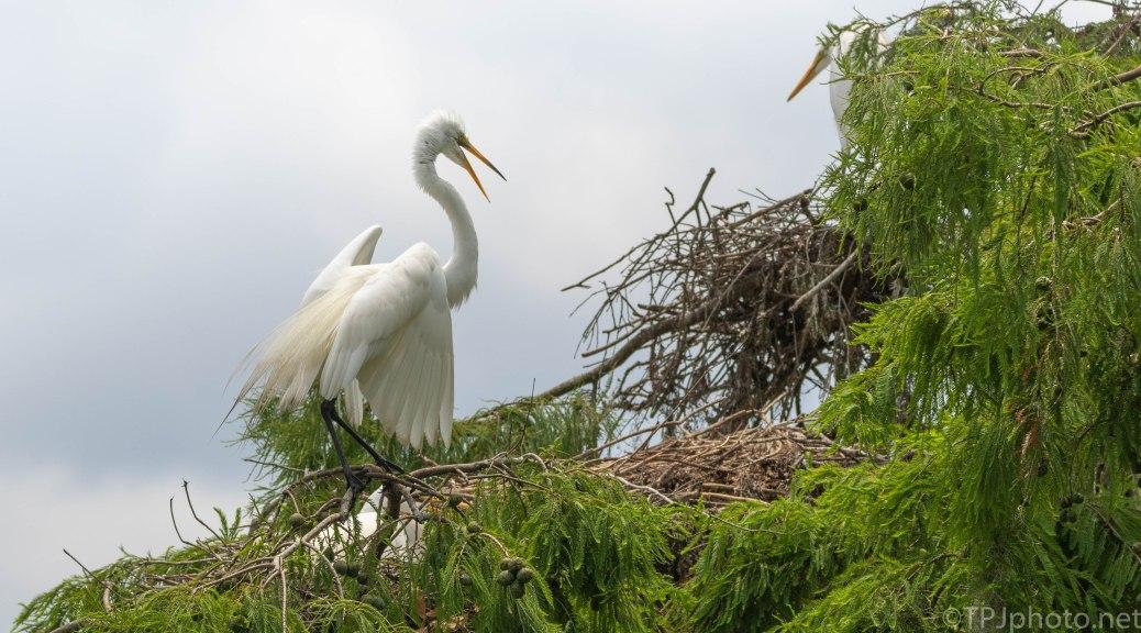 Bad Mood Egret