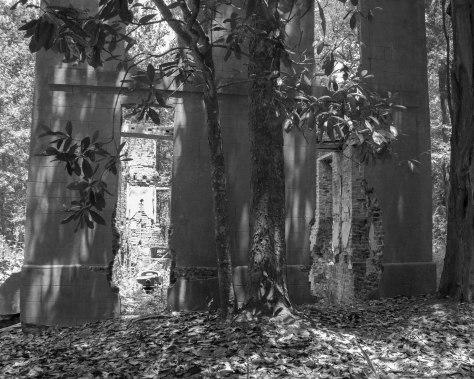 Coming's T Plantation, Monochrome, Black And White