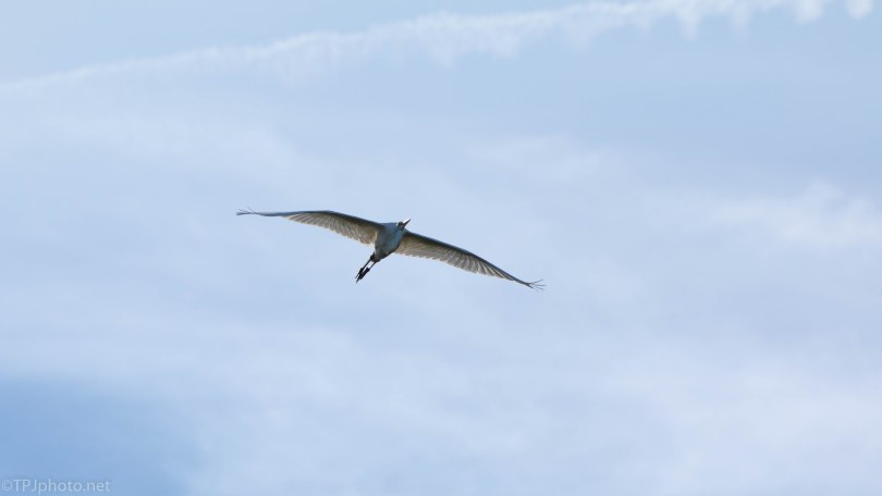 Clear Blue Sky And An Egret