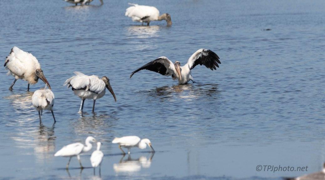 Surprise, The Water Is Deep, Stork