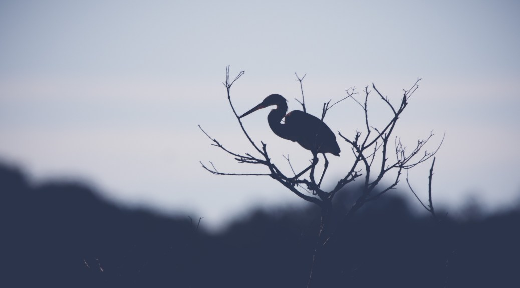 Just A Silhouette, Heron