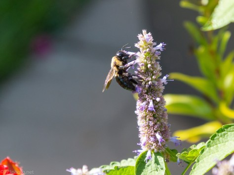 A Bee Experiment (2)