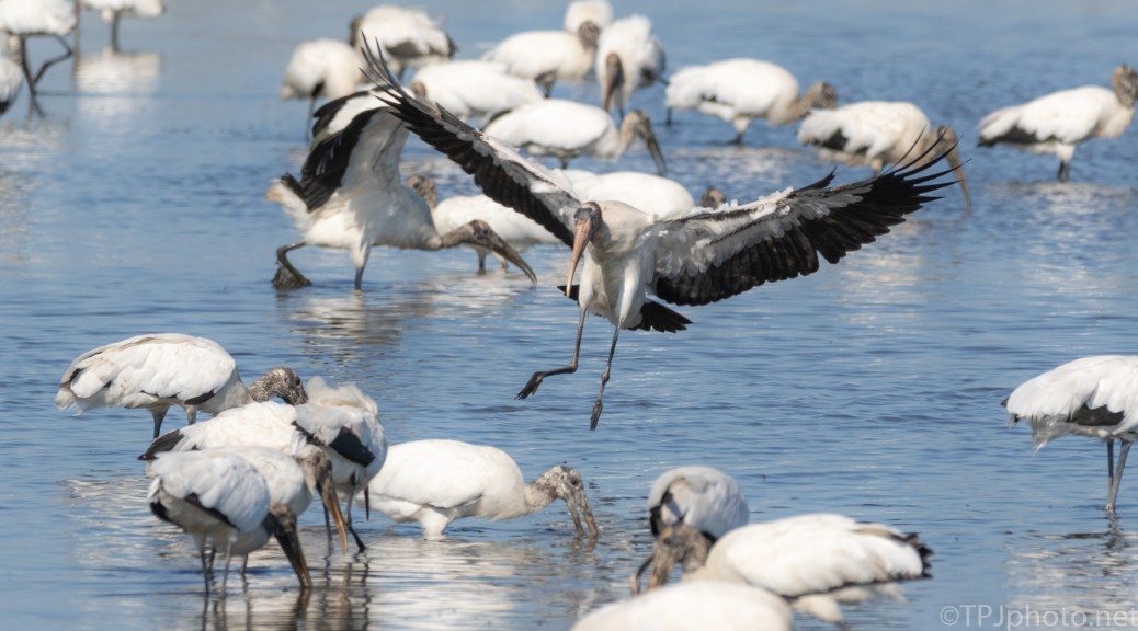 Right In The Middle, Stork