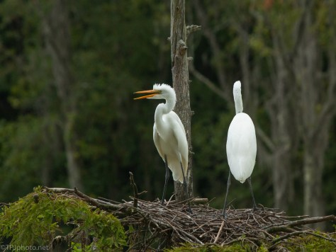 Will Not Leave Home, Egrets