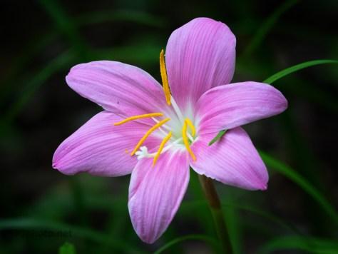 Vivid Color, Unknown Flower