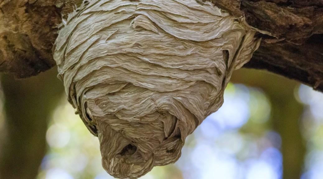 Seen Overhead, Bee Nest