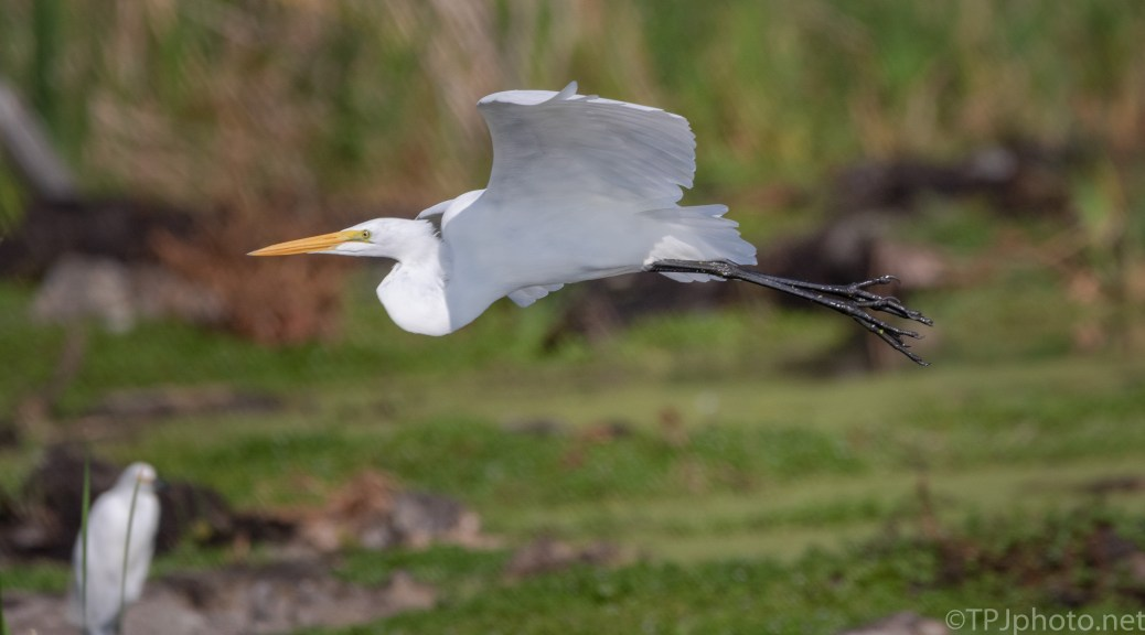 Going Right By Me, Egret