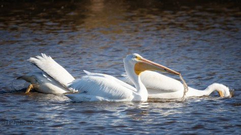 Pelican, How it's Done