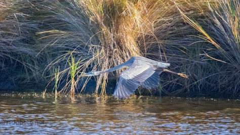 Full Speed Ahead, Heron