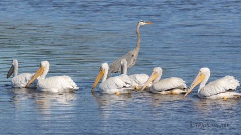 Outnumber, Time To Leave, Pelican And Heron